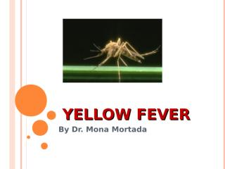 Yellow fever.ppt